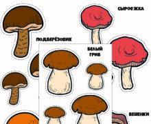 Съедобные грибы для вырезания