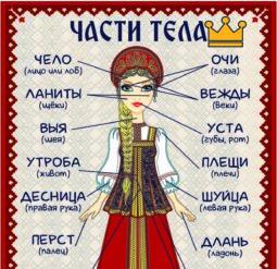 Части тела на старорусском языке