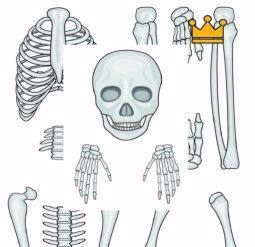 Собери скелет