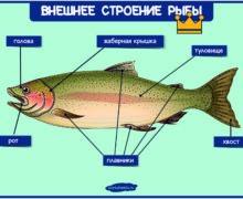 Внешнее строение рыбы - плакат