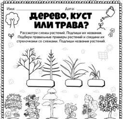 Дерево, куст или трава