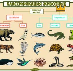 Классификация животных