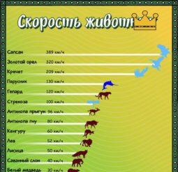 Скорость животных