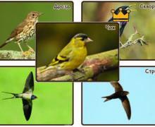 Перелетные птицы России - фотографии