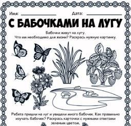 С бабочками на лугу