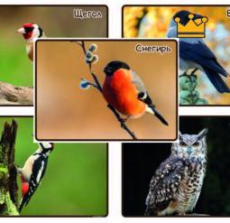 Зимующие птицы России - фотографии