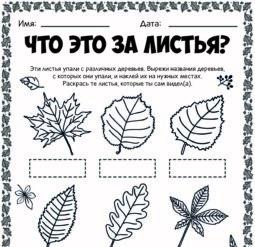 Что за листья?