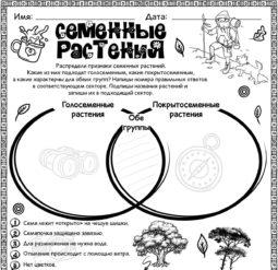 Семенные растения - сравнение