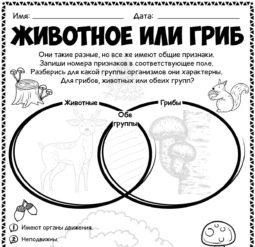 Животное или гриб - сравнение