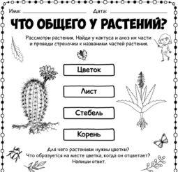 Что общего у растений