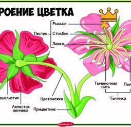 Строение цветка - плакат